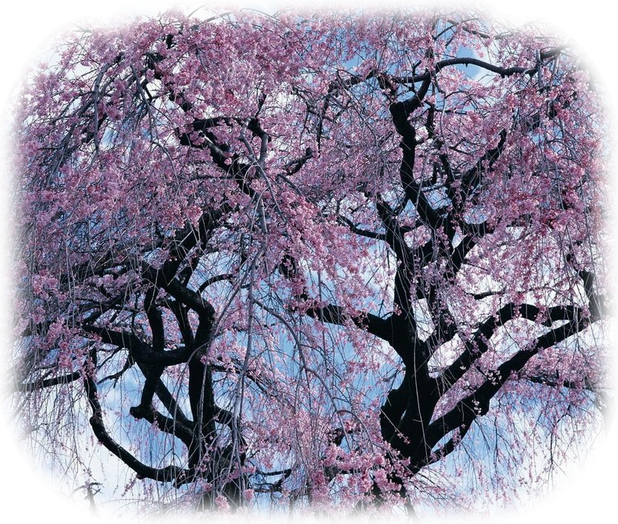 Tavaszi png képek - saját szerk.