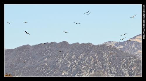 Rocher du Caire: Spot des Vautours Fauves en Baronnies Provençales