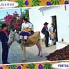 algrave portugal 1973