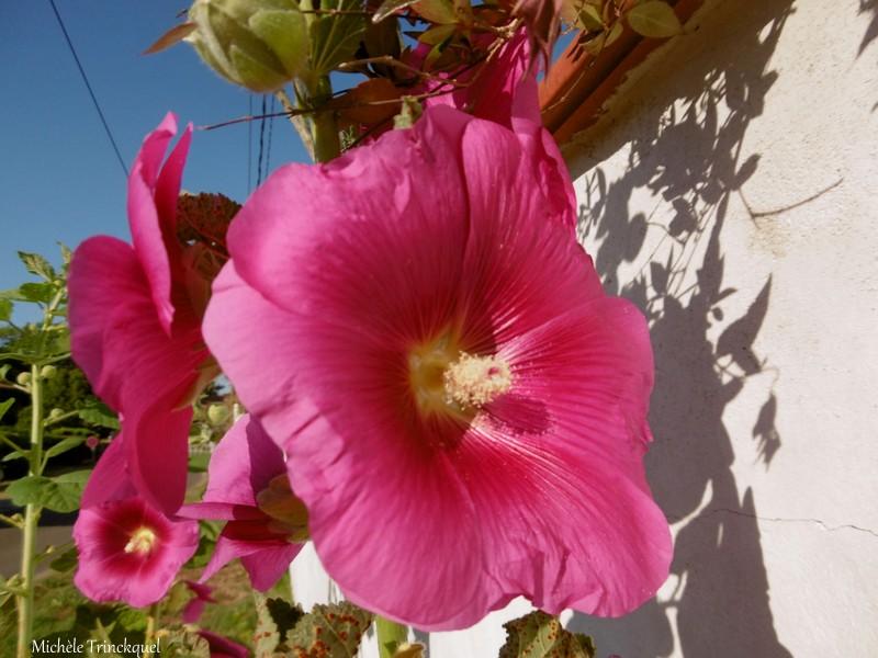 Les fleurs du samedi....