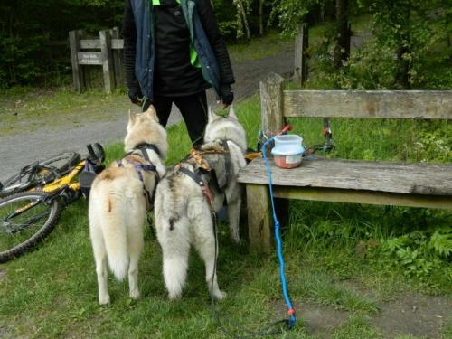 CaniVTT et chiens des glaces