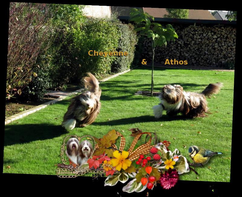 ♥ Bon week-end  d' Athos & Cheyenne ♥
