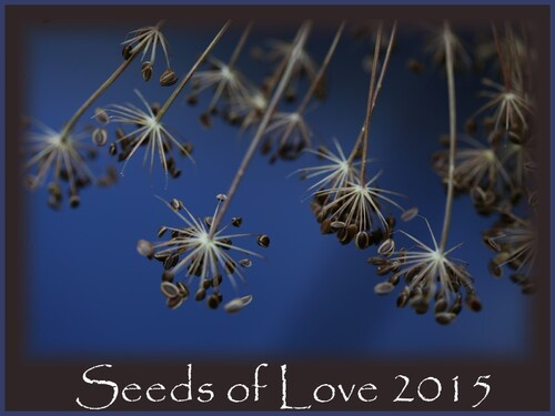 Seeds of Love 2015, c' est parti.......