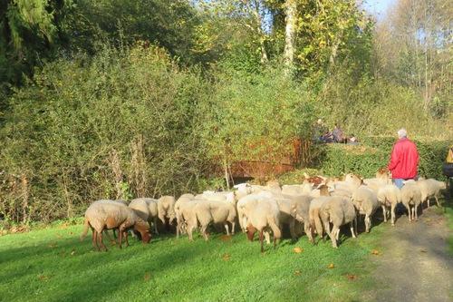 La transhumance des moutons à Malesherbes