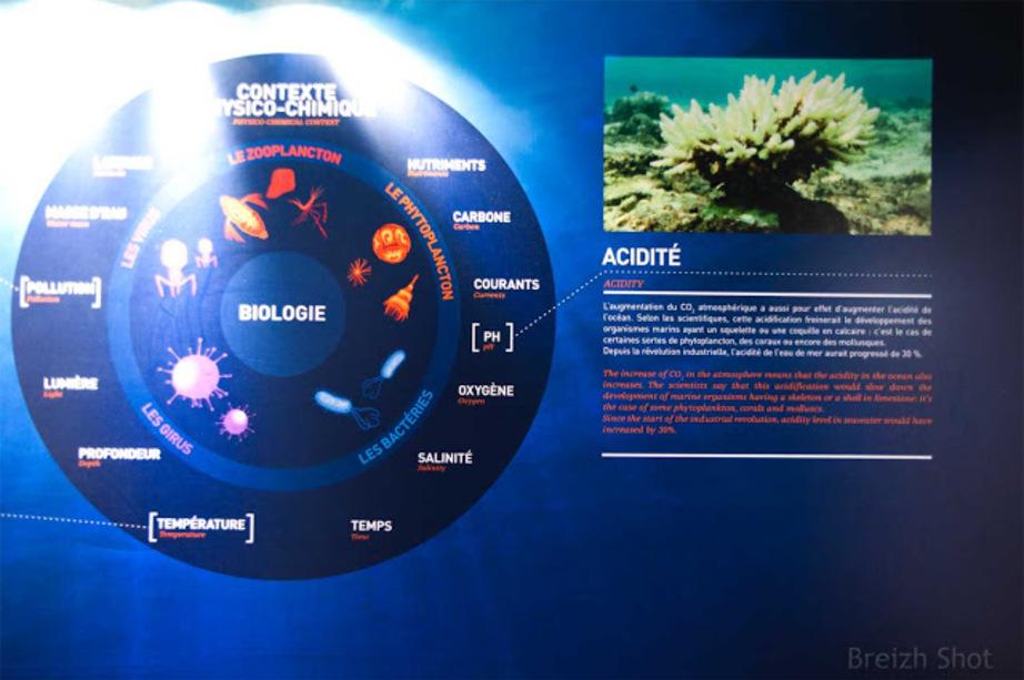 Tara Oceans : La recherche océanographique expliquée