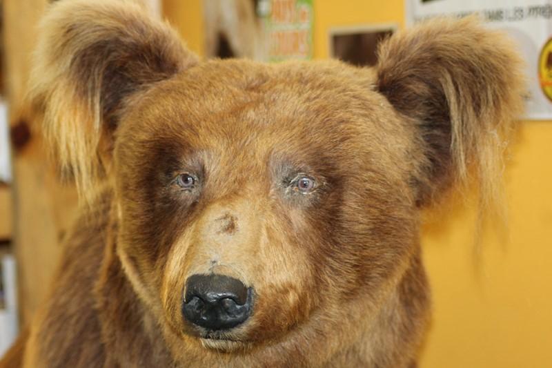 On va voir les ours!
