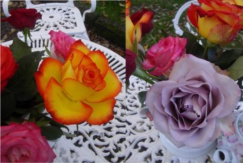 l'effet d'un bouquet de roses