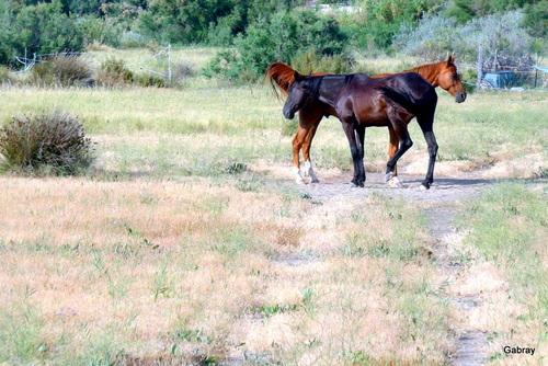 Les chevaux dans le pré!