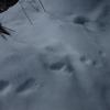 Traces d\'animaux sur la neige