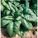 10 légumes pour le potager du débutant