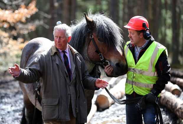 Charles et les chevaux