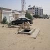 Mauritanie Nouakchott Chèvres dans la rue