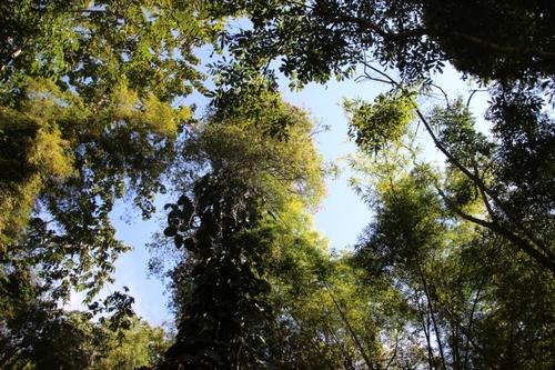 Les chutes de Kouang Si et les ours noirs