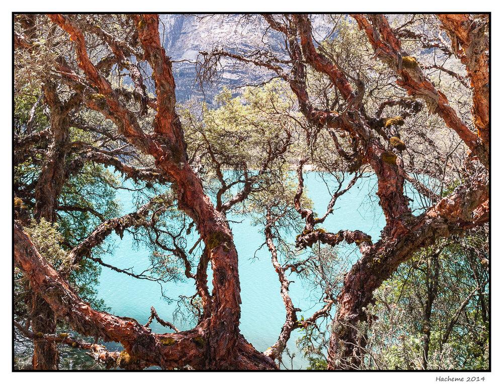 Quenuales et lac Orconcocha