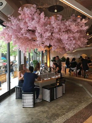 books cherry blossoms dinner bar restaurant terrasse