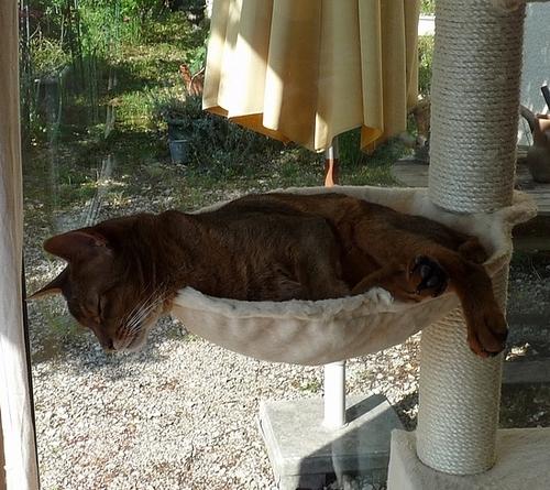 Pendant que Callis dort ........