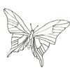 Le papillon de Shirounet