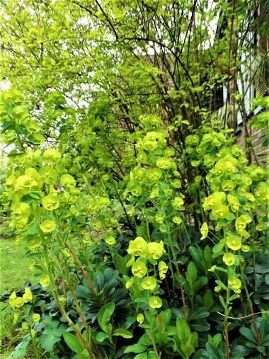 Tout en vert et jaune chartreux! Un jardin lumineux pour Pâques!