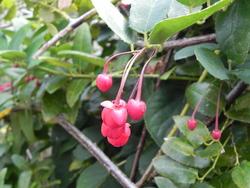 Jardin privé à Binic