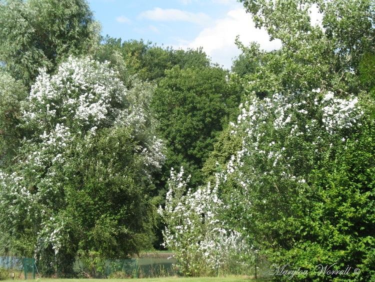 Souffelweyersheim 67 : Journée en famille