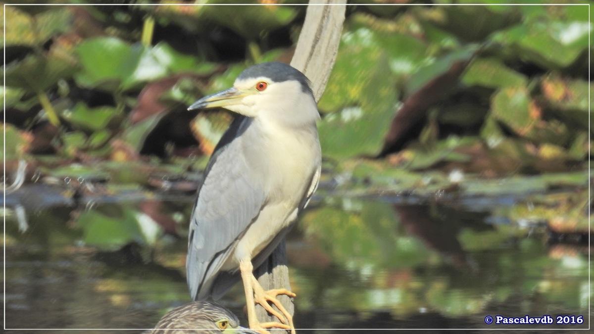 Réserve ornitho du Teich - Septembre 2016 - 9/11