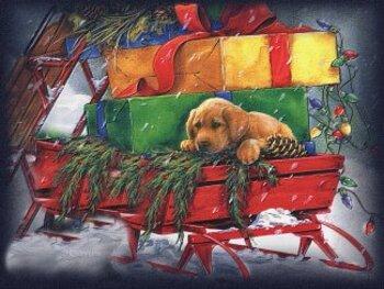 Conte:  Noël de chien perdu