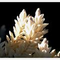 De belles blanches en pleine lumière! - Photo : Edgar