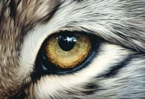 Dessin et peinture - vidéo 2024 : Comment peindre les poils a la peinture acrylique ? - tuto applicable à l'oeil du tigre.