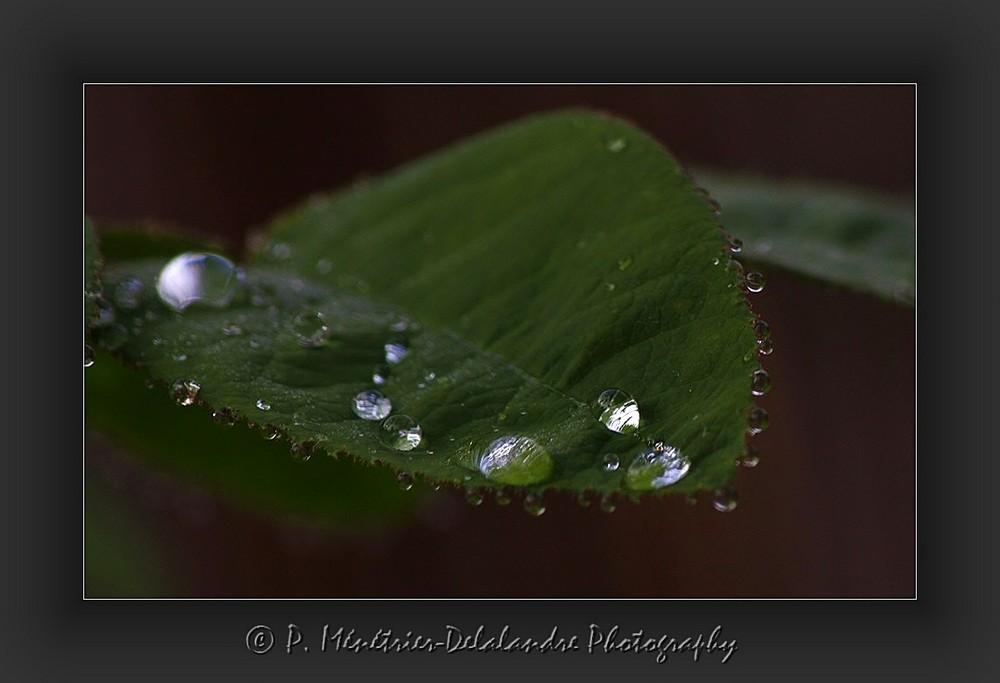 Après la pluie, les perles...