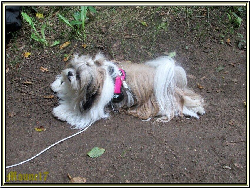 Cani-Nature du dimanche 30 juillet  2017