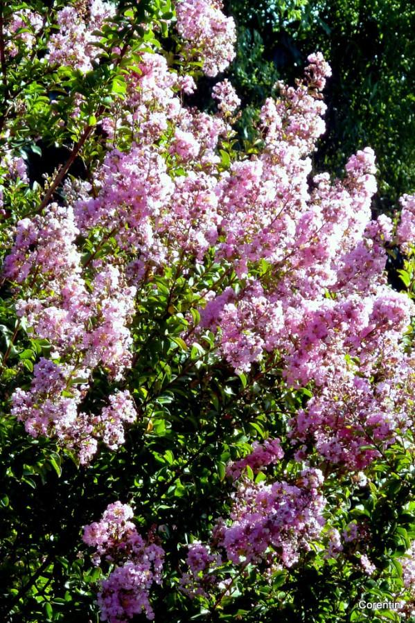 dl04---fleurs.JPG