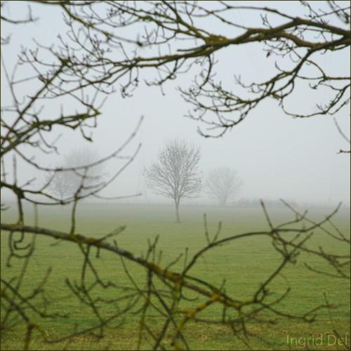 paysages 5598-copie