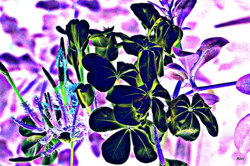 Variation : fleurs du plumbago