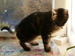 Garde d'un chat au domicile à Orvault