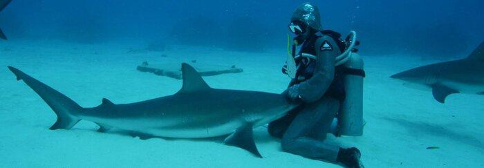 En 2013, cette femme sauva un requin en plongeant son bras dans sa gueule et désormais, il vient se laisser câliner à chaque qu'il la voit