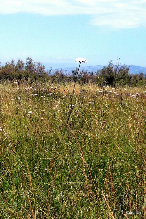 Le champ envahi par les herbes sauvages