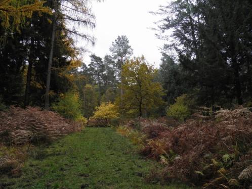 Dans l'arboretum 2