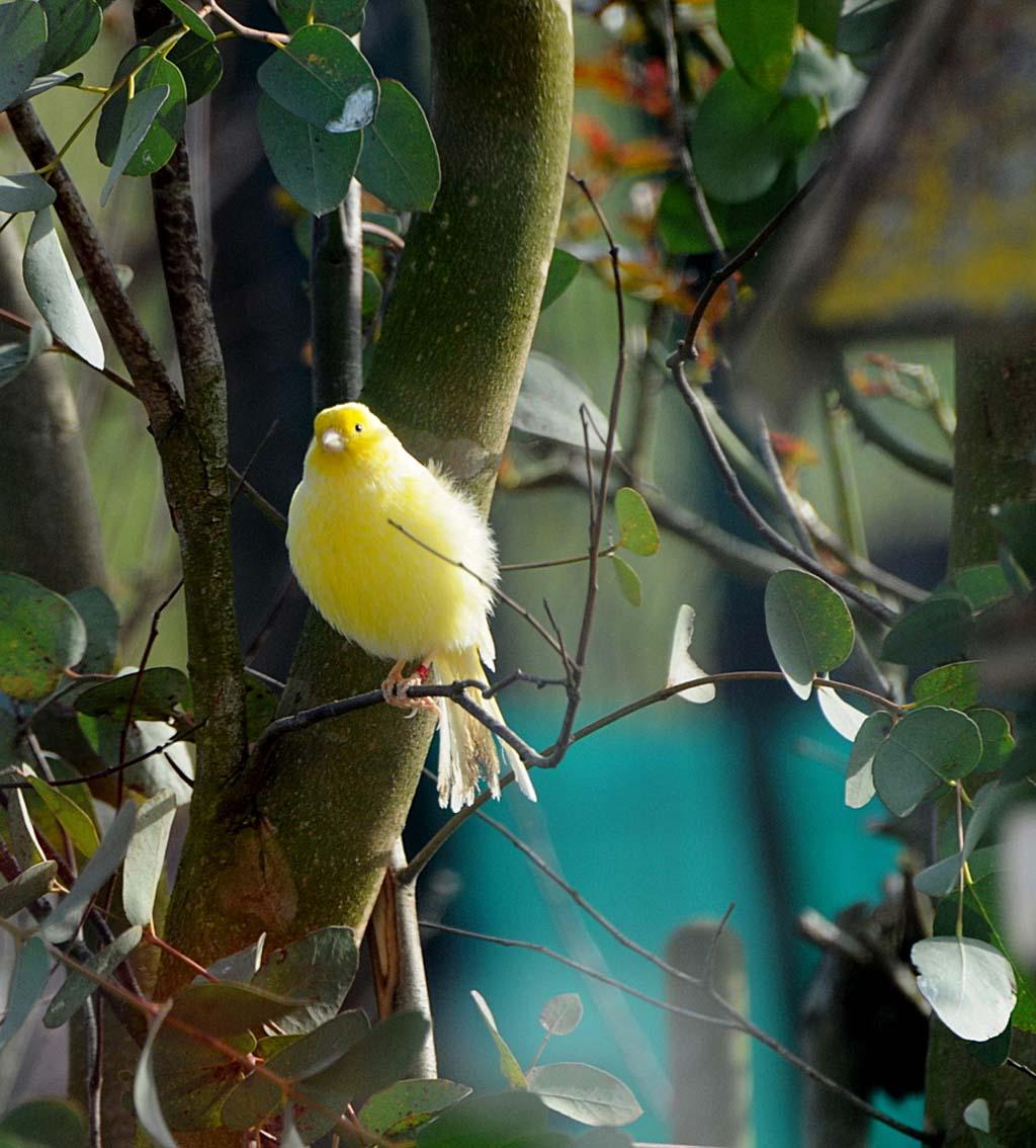 Un visiteur dans mon jardin!