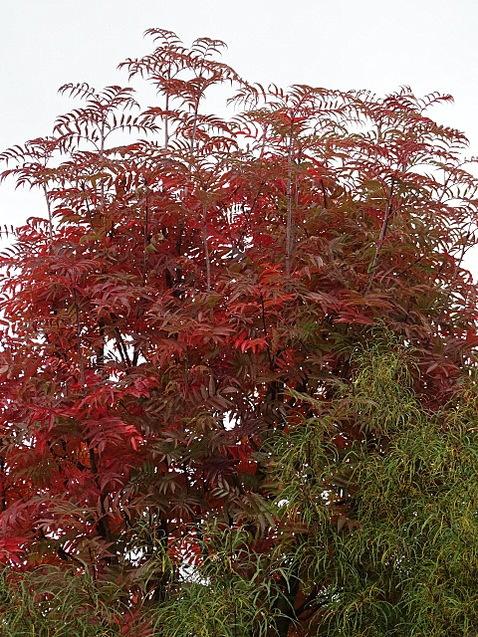 Couleurs d'automne aux jardins Amoena