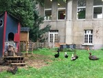 De nouveaux pensionnaires au Petit Jardin