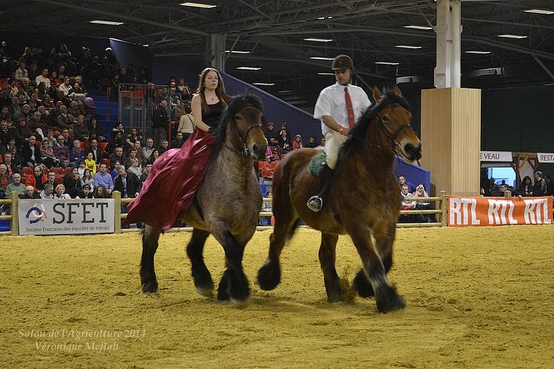 Salon de l'Agriculture 2014 : Les chevaux de trait Ardennais