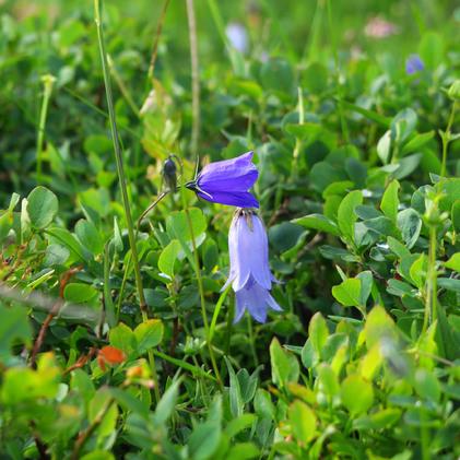 Des fleurs... toujours des fleurs
