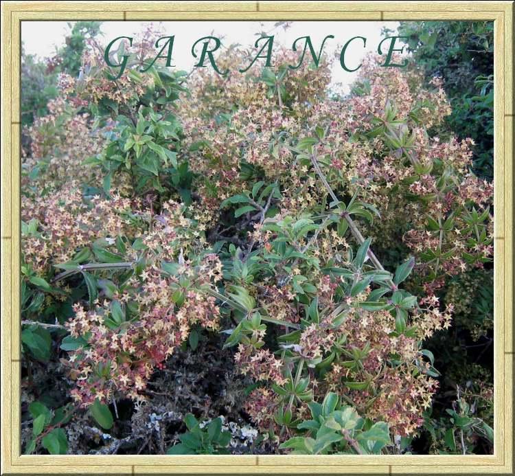 Vertus médicinales des plantes sauvages :