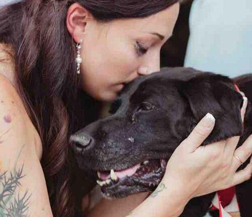 Mourant, un chien veut à tout prix assister au mariage de ses maîtres