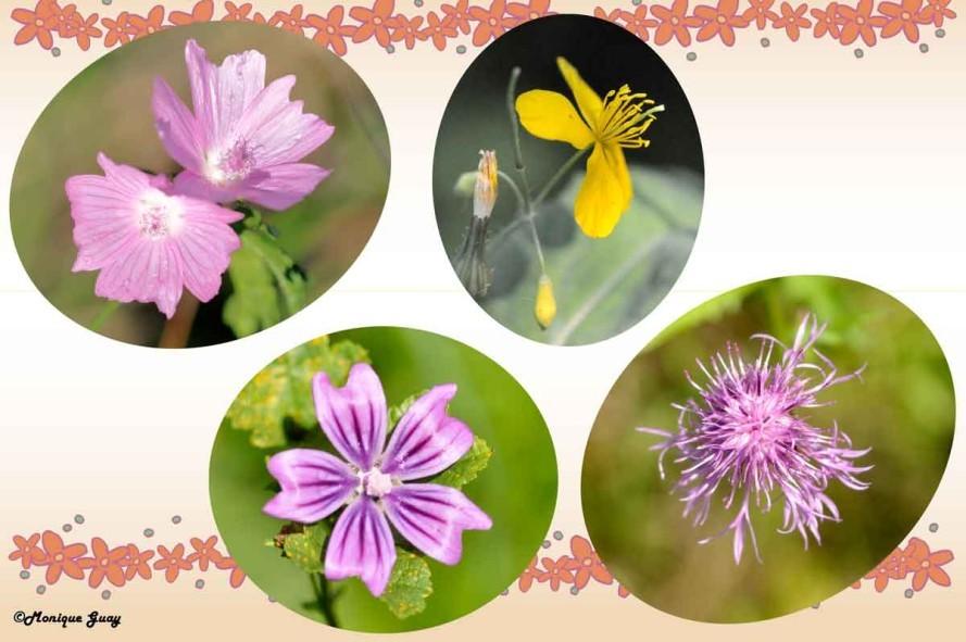 quatre-fleurs-1