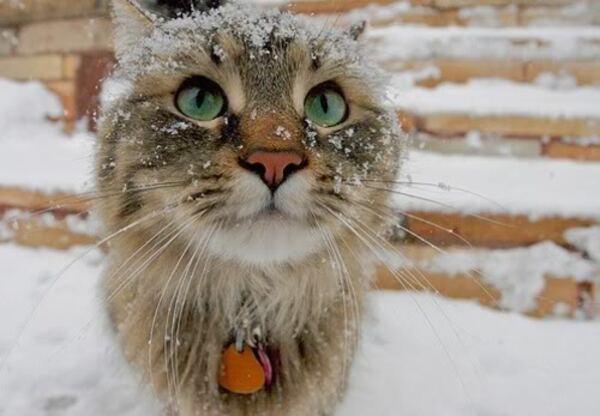 J'écoute l'hiver