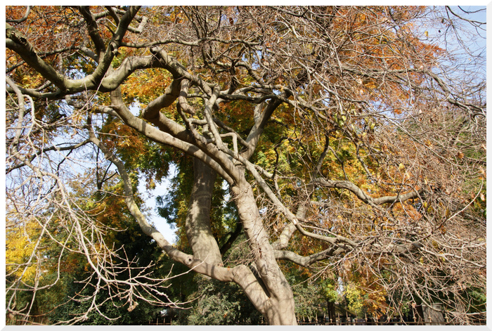 Les arbres au jardin des plantes. Automne