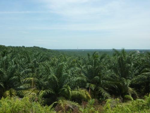 Pulau Paangkor - Pontian