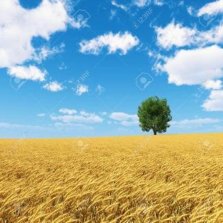 Rêve de blé ...