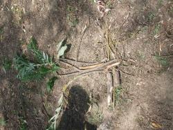 plantation de graines